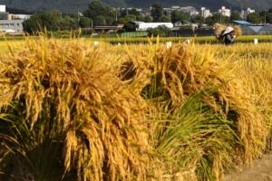 쌀 수입관세율 513% 공식 확정