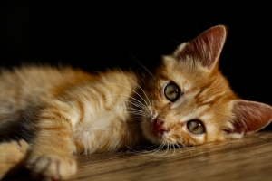 코로나19 확진자 키우던 고양이도 최종 확진…국내 7번째(종합)