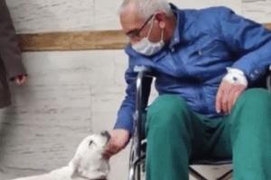 병원 입구에서 6일… 휠체어 탄 주인과 감동재회