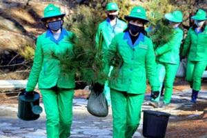 '나무 심는' 북한 식수절
