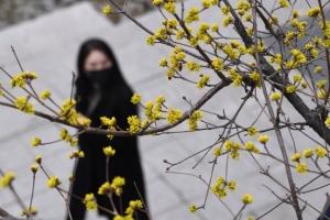 봄 소식 전하는 산수유꽃