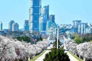 북한 '평양은 온통 꽃바다'