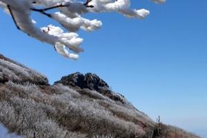 꽃이 그리도 미웠나… 난데없이 얼어버린 무등산