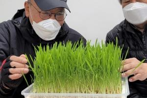 광진구, 코로나 우울 극복…어르신 채소 재배키트 지원