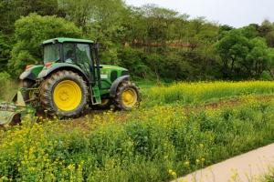 코로나 때문에…유채꽃밭 갈아엎는 트랙터