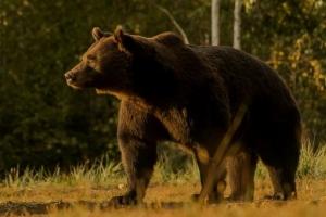 리히텐슈타인 왕자, 허가증과 다른 유럽 최대의 불곰 사냥