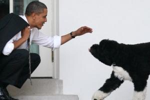 """오바마, '퍼스트 도그' Bo 세상 떠났다며 """"진정한 친구 잃었다""""…"""