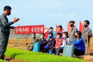 북한의 봄, 모내기철 풍경