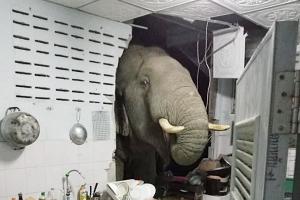 배고파서… 한밤중에 벽 뚫고 부엌 뒤진 태국 코끼리