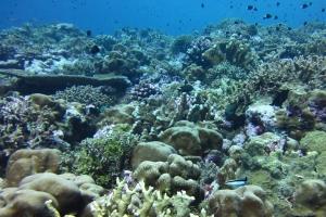 해양산성화에도 바다의 이산화탄소 흡수력 줄지 않는다