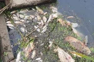 쿠팡물류센터 화재현장 인근 하천서 물고기 떼죽음