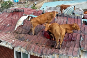 '집에 가고 싶어요' 지붕으로 대피한 소
